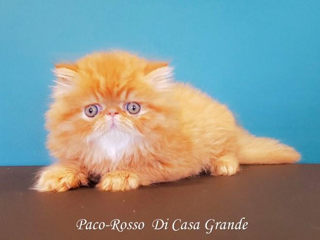 PACOROSSO Di Casa Grande (120 sur 24)
