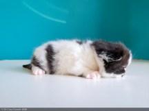 BICO-BLACK-WHITE-LOLLIPOP-2-weeks (15 sur 30)