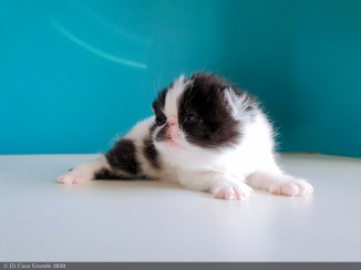 BICO-BLACK-WHITE-LOLLIPOP-2-weeks (26 sur 30)