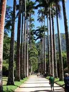 689d1349269135-jardim-botanico-rio-janeiro-5-thumb2