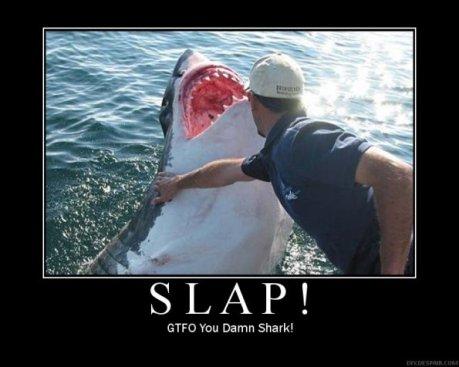 shark_slap