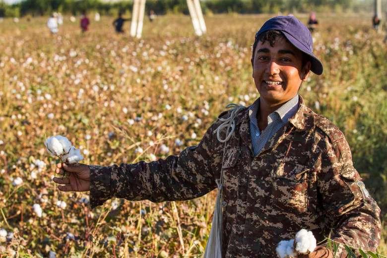 Région de Boukhara- récolte du coton