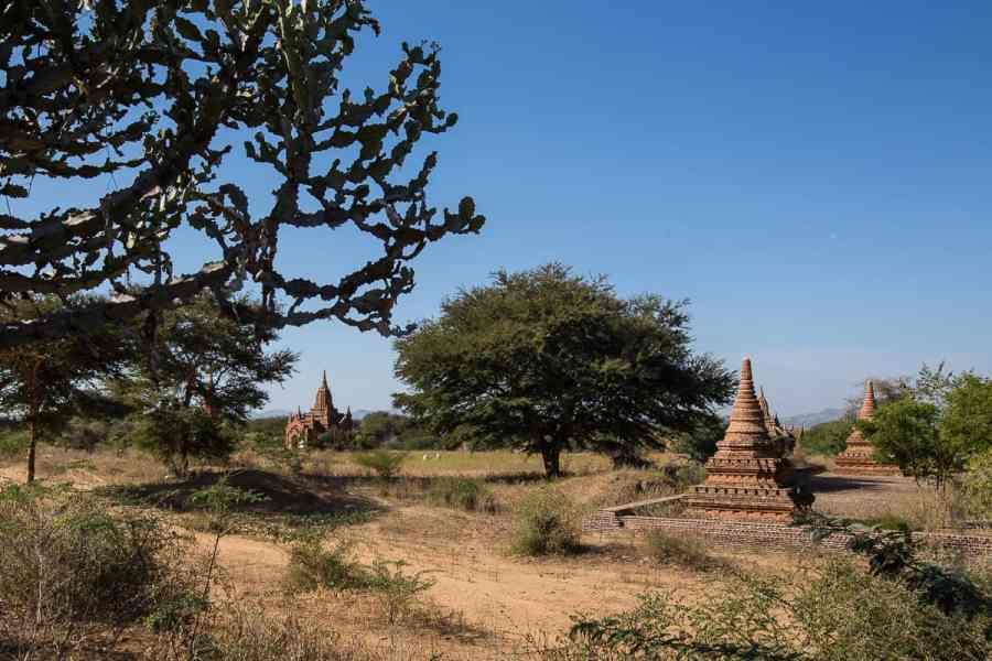 La plaine de Bagan poussiéreuse, sa végétation arbustive et les innombrables stupas et temples.