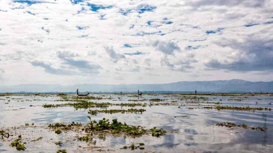 Pêcheurs au milieu des jacinthes d'eau envahissantes