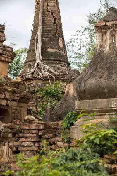 Les stupas colonisés par la végétation