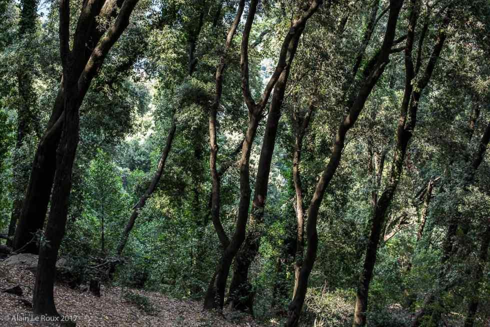 Forêt autour du Monastère de la Verne