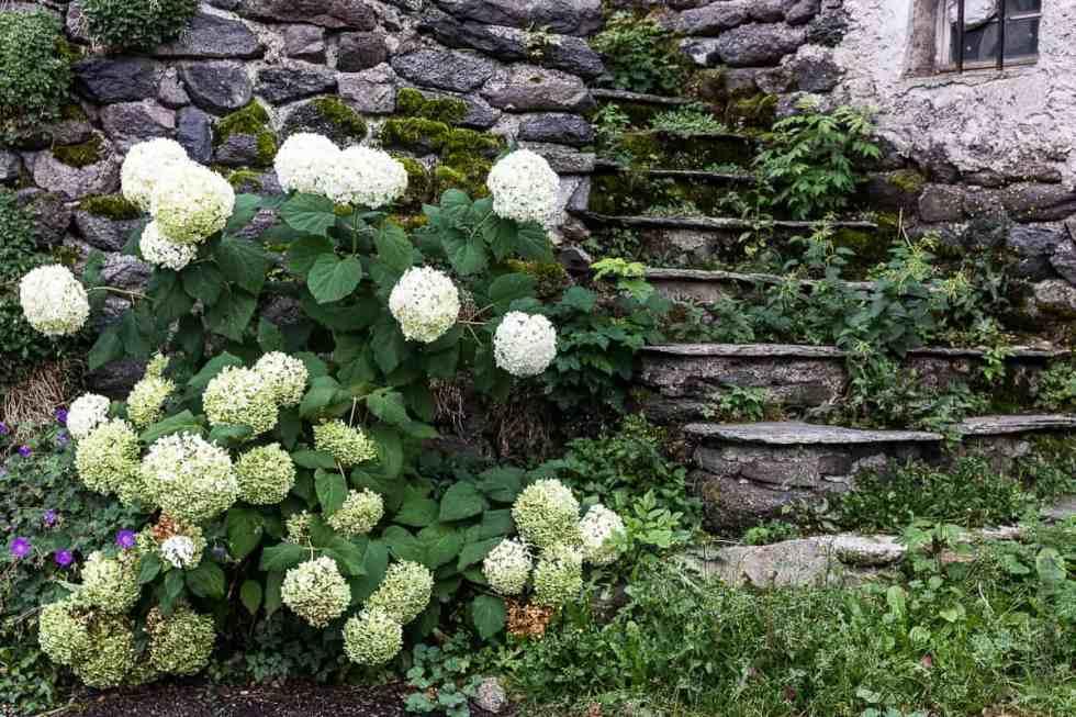 Fleurs et vielles pierres