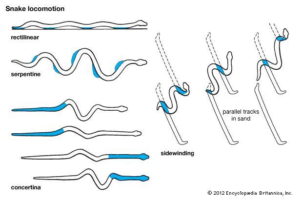 Smooth nature snake movement patterns