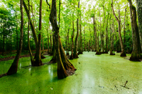 SWAMP | meaning in the Cambridge English Dictionary