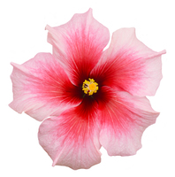 flower definition in the