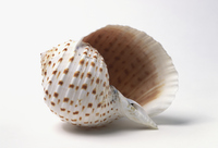 seashell definition in the