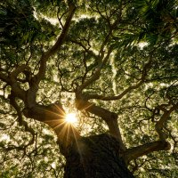 Root and branch (Idioms with nature words, Part 3)