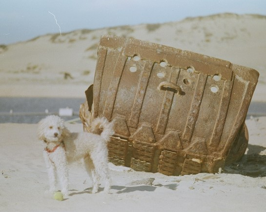 Bajo and Sand Dredge, expired 35mm film (C) Dida Kutz