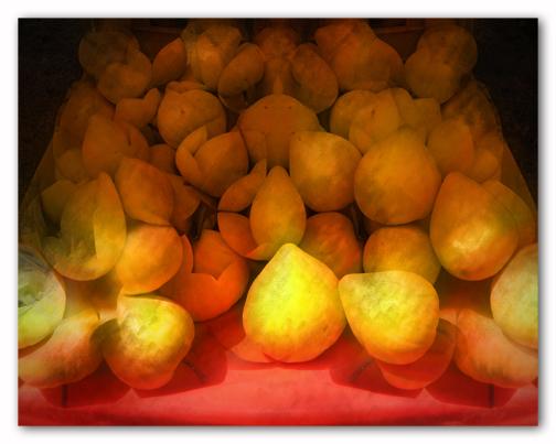 Egg fruit - 2009