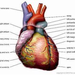 Heart Diagram Inside 2001 Hyundai Accent Ecu Wiring The Powerful Machine You