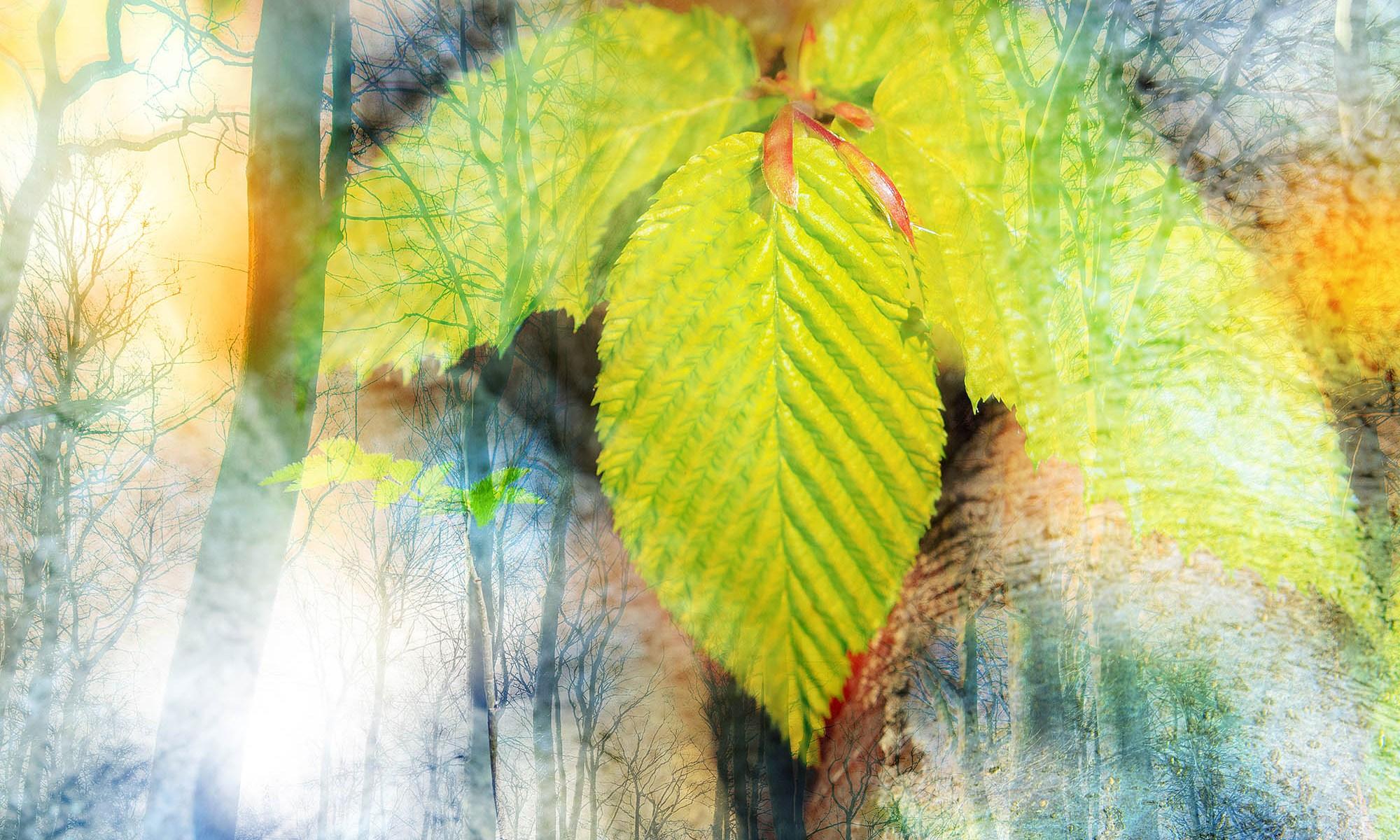 """Die kleine Waldgalerie, Ausstellungsbild """"Erwachen"""" ist ein Frühlingsmotov aus den Wäldern in Bad Schwartau"""