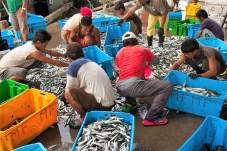 Fischer in Kota Kinabalu beim Sortieren ihres Fangs. © Gebeco Länder erleben