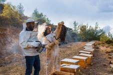 Forschungsergebnisse schätzen, dass im Durchschnitt nur 5-10 Prozent der von Hotels gekauften Nahrungsmittel (wie Marmeladen und Honig) lokal produziert werden. © TUI