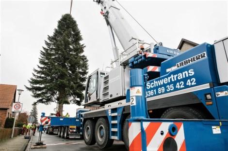 Autostadt Weihnachtsbaum aus Vorsfelde Fotos: Anja Weber