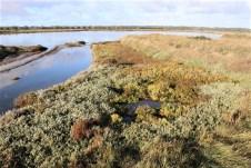 In den Salzwiesen der Vendee wird beliebtes Speisesalz gewonnen. An den Flächen schließt sich ein weitreichendes Vogelschutzgebiet an. © Kurt Sohnemann