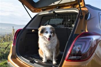 Gut dimensioniert ist der Kofferraum. Werden die Fondlehnen im Verhältnis 1/3 zu 2/3 umgeklappt, passen 1372 Liter in das Gepäckabteil. Auch für Bello ist Platz. © Opel