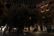 Mit dem 800-jährigen Olivenbaum in der Mitte bietet der Placa de Cort einen beliebten Treffpunkt im historischen Zentrum von Palma. © Kurt Sohnemann