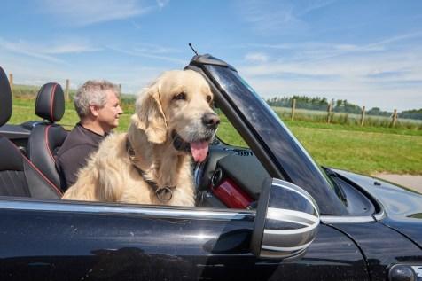 Hundetransport im Auto: Ungesichert auf dem Beifahrfersitz sieht zwar lustig aus, ist aber keine gute Idee. Foto: Auto-Medienportal.Net/ADAC