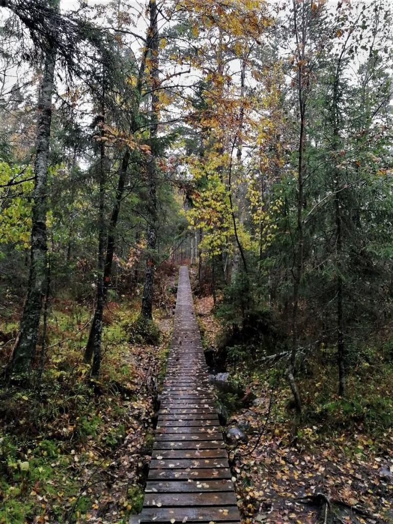 Tag 5 – In den Wäldern des Skuleskogen Nationalpark
