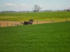 Feldarbeit halt mit Pferden statt mit Traktoren