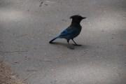 ???? Ich habe noch nicht rausbekommen was für ein Vogel das ist