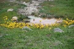 Dank der Wärme aus dem Boden blühen die Blumen