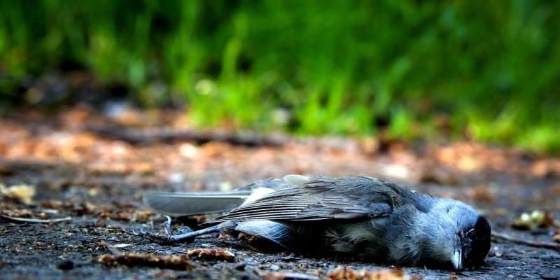 Bird Death Die Pain Nature  - 3345408 / Pixabay