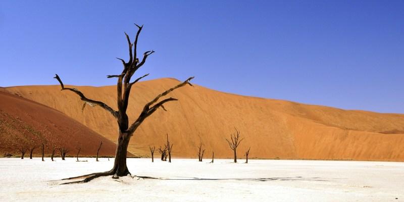 Tree Desert Namibia Dead Vlei  - katja / Pixabay