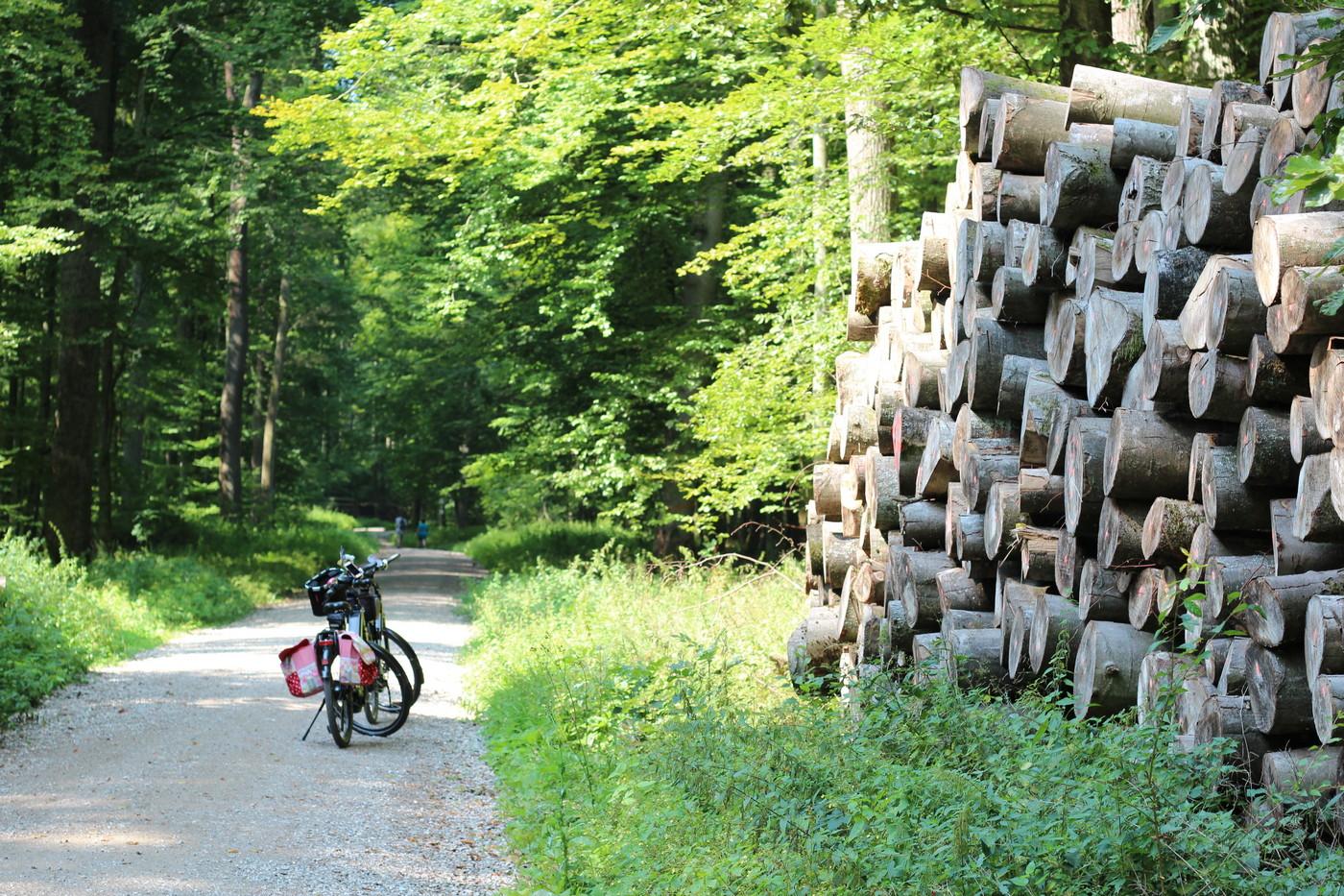 e-Bike im Wald