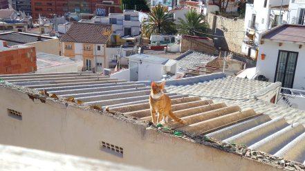 Foto einer roten Katze auf den Dächern der Altstadt in Alicante.