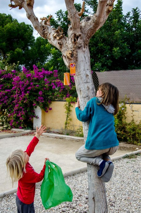 Foto von zwei Kindern auf einer Schatzsuche, eines klettert gerade einen Baum hoch um etwas von dort zu holen.