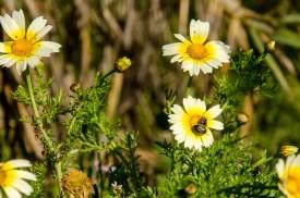 Nahaufnahme von Blumen mit Käfern.
