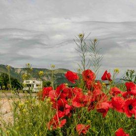Mohnblumen mit Wohnmobil und Bergen im Hintergrund.