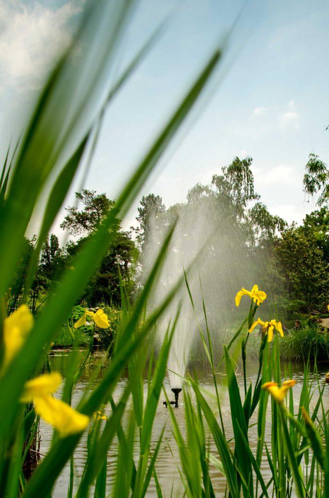 Springbrunnen im Teich und Wasserlilien.