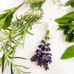 naturseife kaufen mit echten kräutern und natuerlichen bio oelen