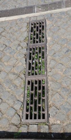 Rom Kanal (3)