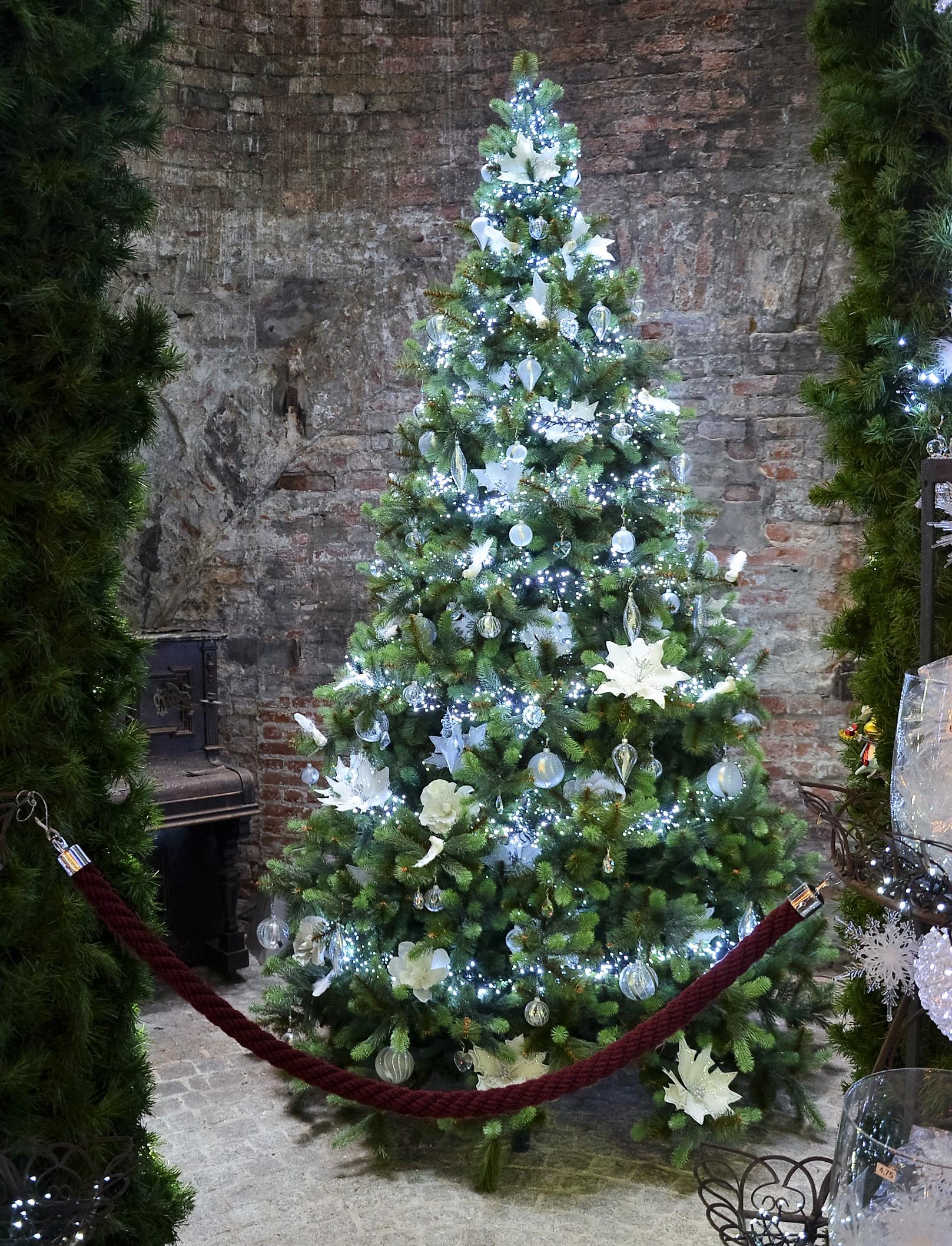 Weihnachtsbaum - ein Weihnachtstraum