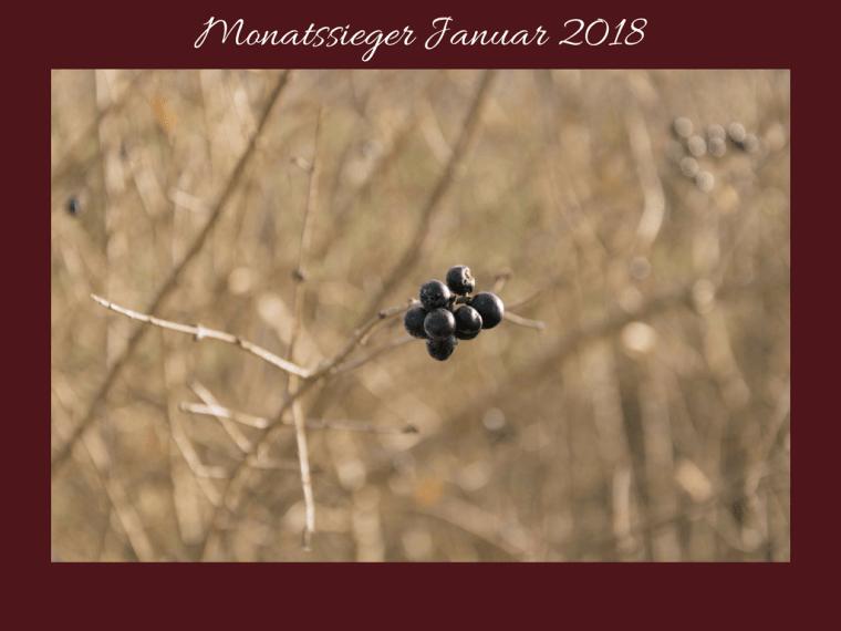 Monatssieger Januar 2018