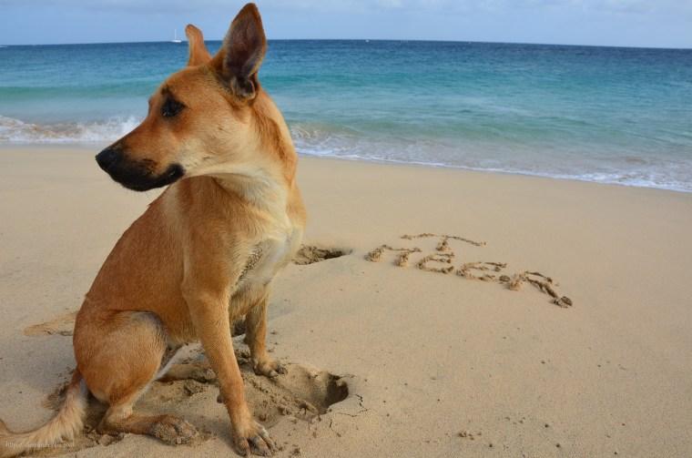 Hund am Strand von Santa Maria
