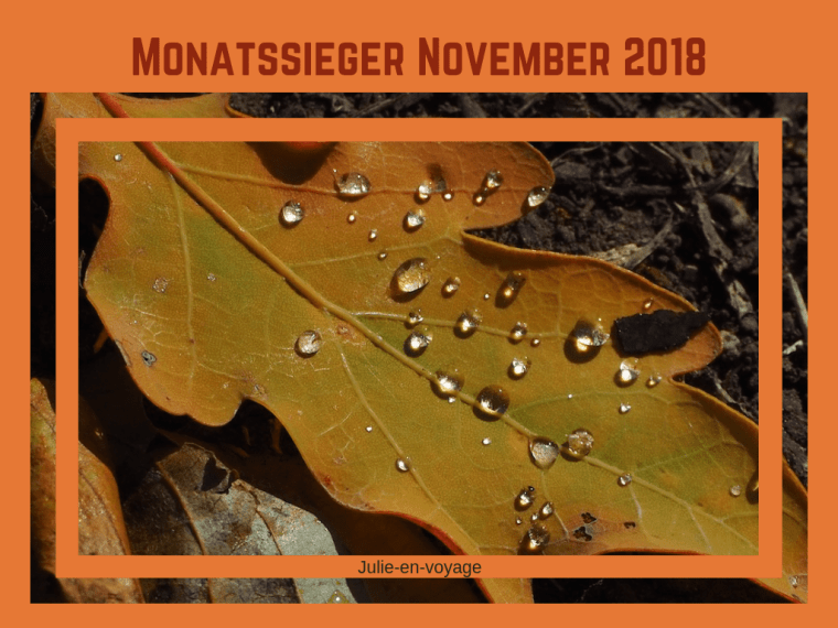 Monatssieger Nov 2018