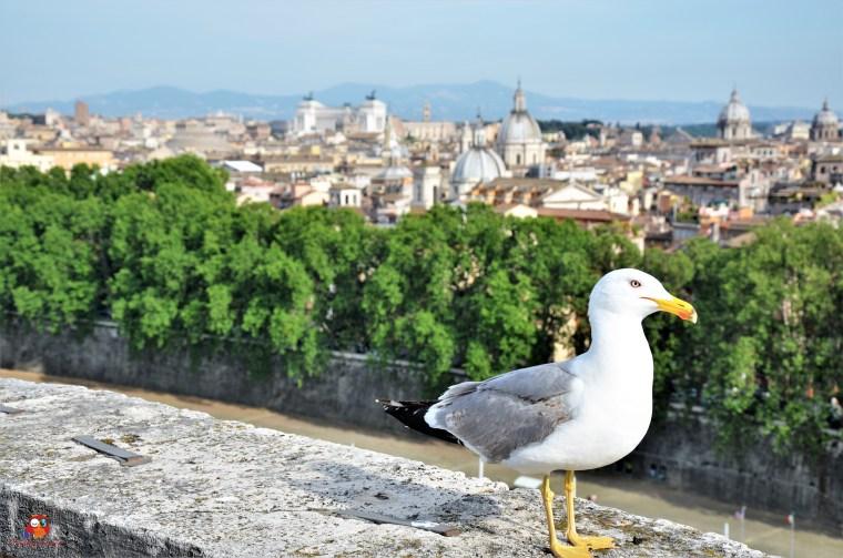 Roma (468)