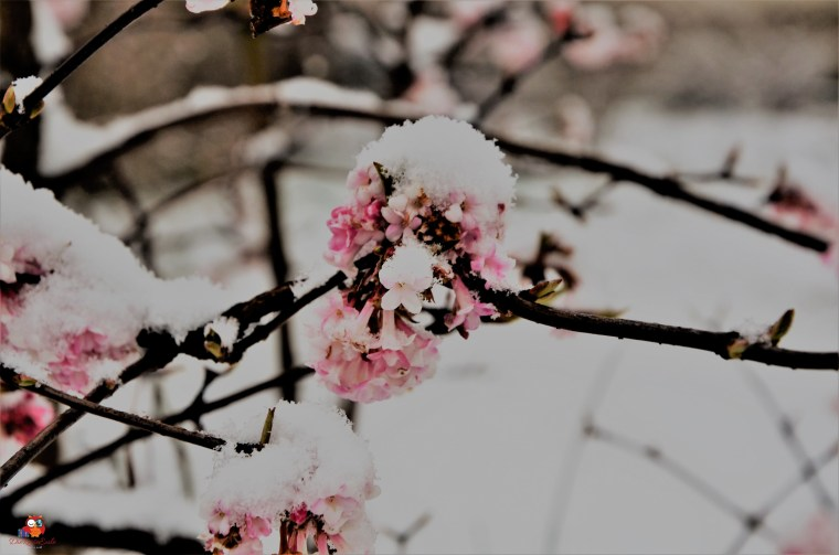 Schneefall (2)