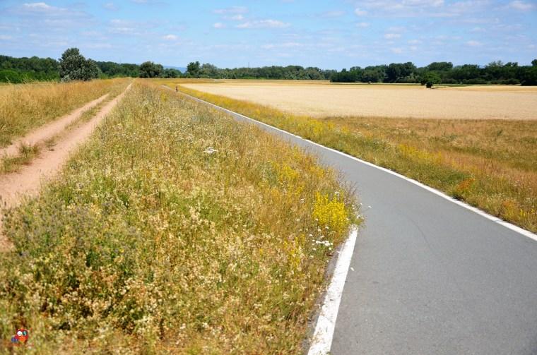 Fahrradschnellweg bei Trebur