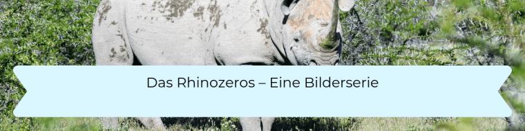 Das Rhinzeros - Eine Bilderserie