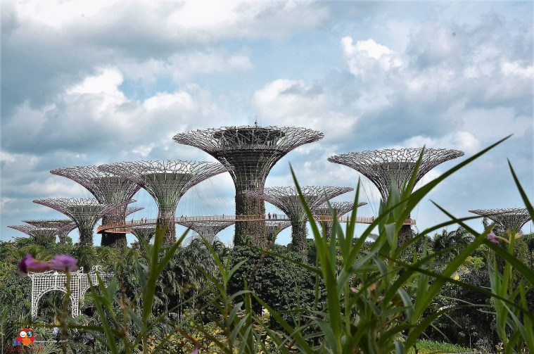 Supertrees im Garden by the Bay
